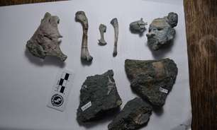Fóssil de 'avô' do crocodilo moderno é descoberto no Chile