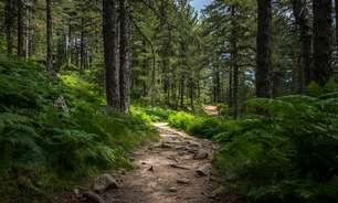 8 cuidados essenciais de quem vai fazer caminhada em trilhas