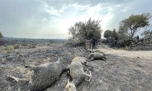 Comunidades estão 'de joelhos' após incêndios, diz governador italiano