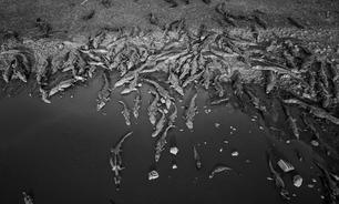 As imagens de animais que lutam pela vida em meio a incêndios no Pantanal