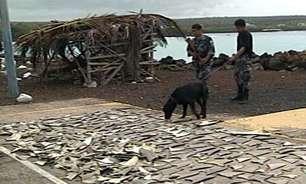 Colômbia confisca quase 3.500 barbatanas de tubarão a caminho de Hong Kong