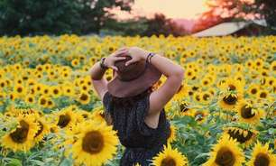 Dicas da Benzedeira: o poder da flor que atrai prosperidade!
