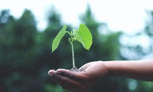 Projetos sustentáveis são tendência no mundo corporativo