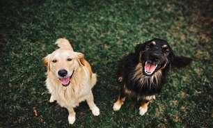 Cachorros têm cárie? Saiba como identificar e tratar