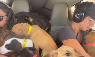 De avião, ativista norte-americana resgata 27 cachorros que seriam sacrificados; assista