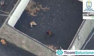 Operador de drone vai tentar salvar cachorros presos por lava de vulcão em La Palma