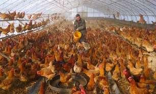 Alta em casos de gripe aviária em humanos na China preocupa