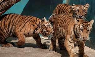 Encontros românticos entre animais de zoológico de Cuba disparam no silêncio da quarentena