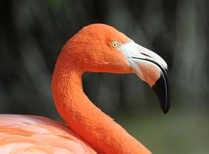 Santuários ecológicos protegem espécies ameaçadas no Caribe