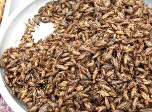 Venda de alimentos com insetos cresce 11%, segundo rede de lojas britânica