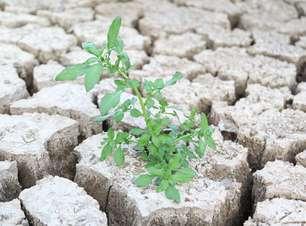 Iniciativa brasileira busca criar semente resistente à seca
