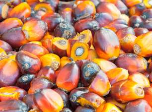 Cuide bem da pele com o óleo de palma