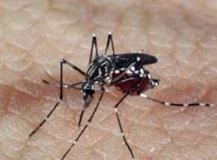 Pesquisadores do PA criam repelente contra o Aedes Aegypti