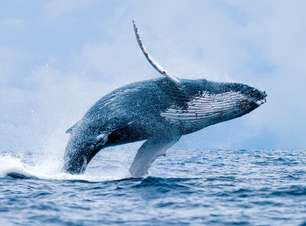Baleia salta em barco e fere ao menos 7 pessoas na Austrália