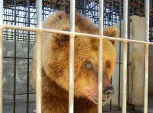 'Ursa mais triste do mundo' deixa Piauí e viaja para SP