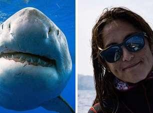 Mergulhadores nadam com o maior tubarão-branco já registrado