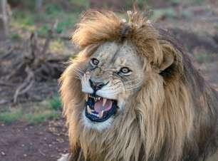As 20 características mais marcantes do signo de Leão