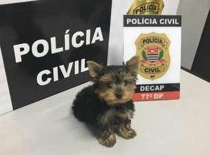 Mulher é presa após furtar cachorro em São Paulo