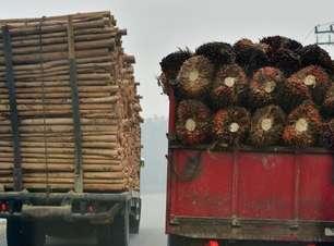 UE é segundo maior responsável por desmatamento relacionado ao comércio internacional, aponta WWF