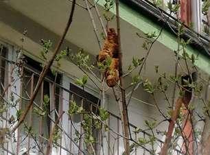 Após confusão, homem descobre que animal perigoso é um croissant