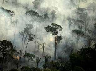 É preciso seguir o Código Florestal ecombater desmatamentos
