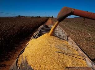 Indicador Cepea para o milho supera os R$ 100 por saca