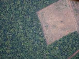 Amazônia bate recorde de desmate pelo 3º mês seguido