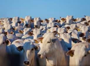 A interrupção das exportações de carne na Argentina pode afetar os brasileiros?