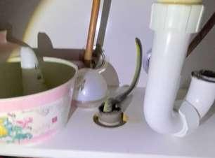 Idosa é surpreendida com cobra enquanto lavava a louça; veja