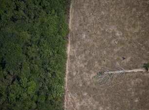 Desmatamento dispara 67% e esvazia promessas de Bolsonaro