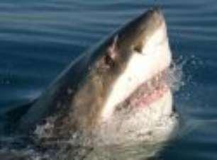 Homem sofre ataque de tubarão em Crescent Head