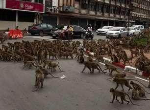 """Briga entre """"gangues de macacos"""" para trânsito na Tailândia"""