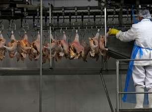 Exportação de frango do Brasil tem em julho maior volume mensal do ano; receita sobe quase 50%