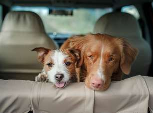 7 cuidados essenciais para você viajar com seu pet!