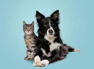 6 dicas para o seu cão e gato terem uma boa relação!