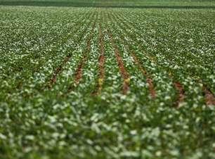 Produção de grãos pode chegar em 252,3 milhões de toneladas