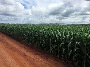 Anec eleva previsão para as exportações de soja e milho do Brasil em outubro