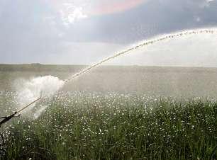 Alta umidade do solo favorece plantio de soja no Brasil em outubro