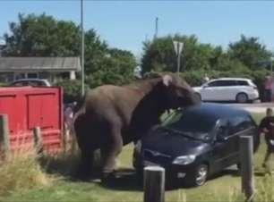 Após ser agredido em circo, elefante quase tomba carro
