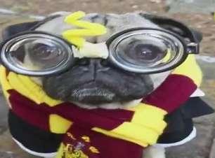 Cão posa de Harry Potter e homenageia Orange is the New Black