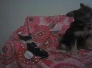 Cachorro dá boas vindas a gato da melhor forma possível