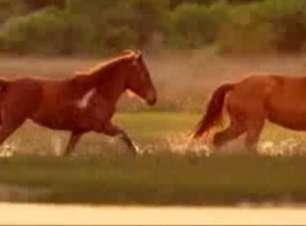 Documentário retrata Cazaquistão como berço da equitação