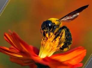 Menos insetos, maiores repercussões