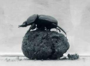 A pesquisa para desenvolver um robô-besouro