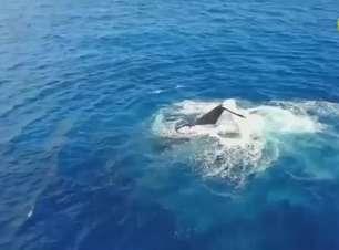 Baleias e observadores não se entendem na ilha de Reunião
