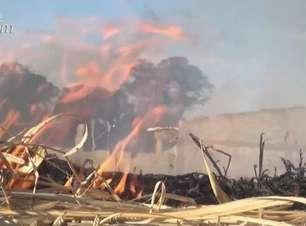 Número de queimadas em terrenos baldios aumentou em Cascavel