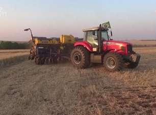 Com valorização do dólar frente ao real safra de grãos no Paraná promete bons preços