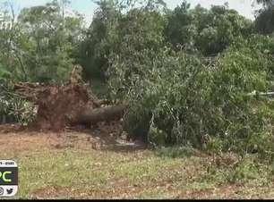 Moradores do Distrito de São Salvador ficam sem água e luz por conta do temporal