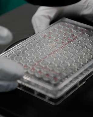 Pesquisadores descobrem como variante escapa dos anticorpos