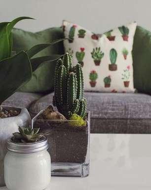 Plantas da sorte: 8 espécies para ter em casa